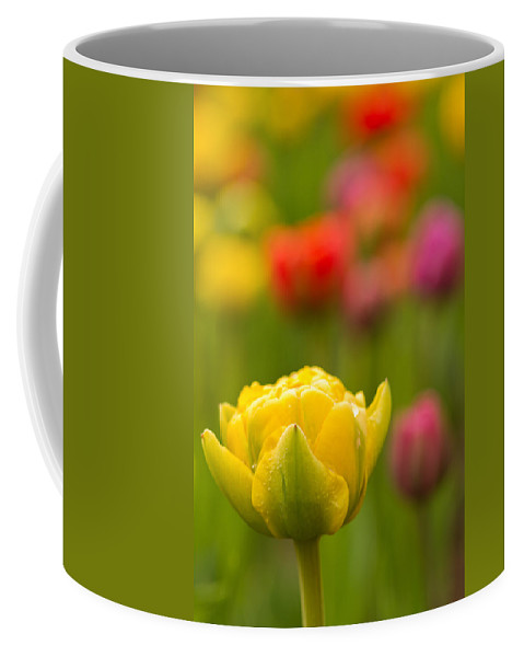 Tulips Coffee Mug featuring the photograph Standing Tall by Lindley Johnson