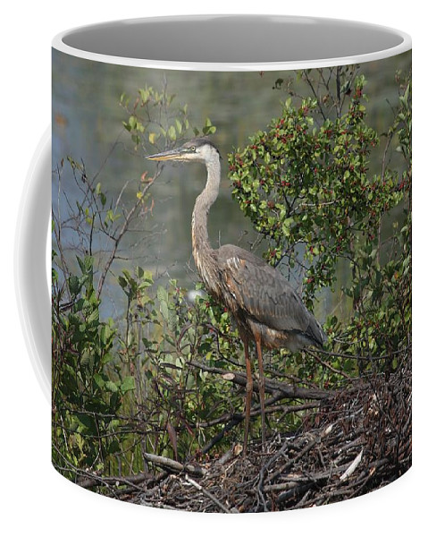 Great Blue Heron Coffee Mug featuring the photograph Standing Tall by Teresa McGill