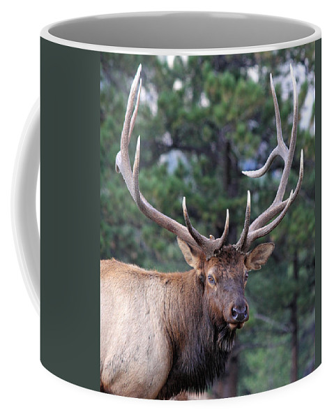 Elk Coffee Mug featuring the photograph Stare Down by Shane Bechler