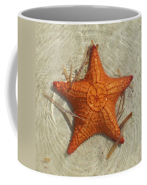 Duane Mccullough Coffee Mug featuring the photograph Starfish 1 Of Bottom Harbour Sound by Duane McCullough