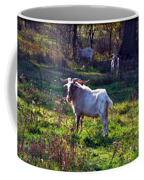 Goat Coffee Mug featuring the photograph Staring by Brittany Horton