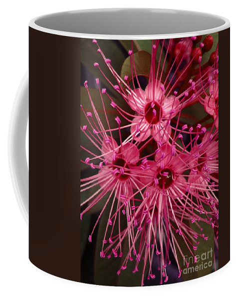 Flower Coffee Mug featuring the photograph Stars by Michelle Meenawong