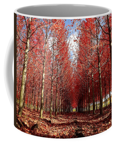Autumn Coffee Mug featuring the photograph Stay by Viviana Nadowski