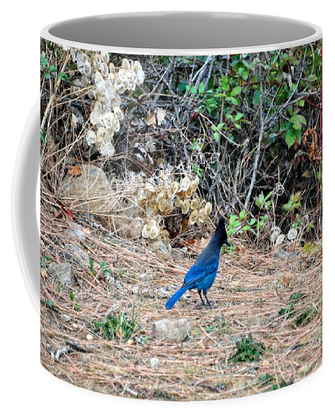 Hood River Coffee Mug featuring the photograph Stellers Jay by Image Takers Photography LLC - Laura Morgan