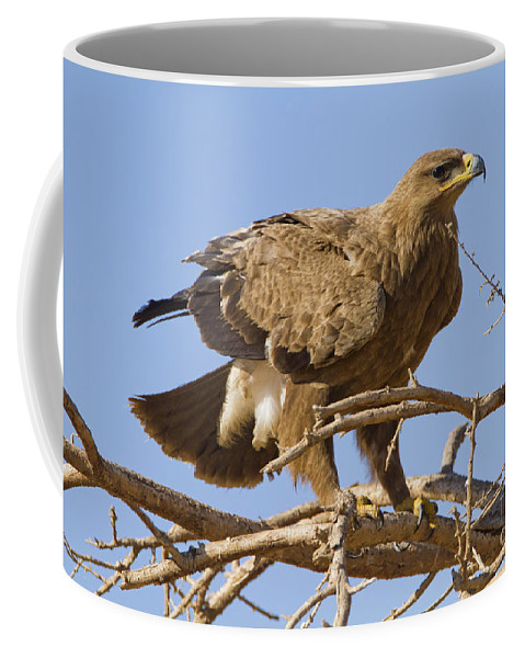 Aquila Coffee Mug featuring the photograph Steppe Eagle Aquila Nipalensis 2 by Eyal Bartov