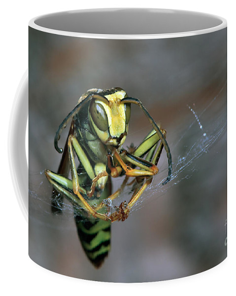 Wasp Coffee Mug featuring the photograph Sticky Situation by Rick Mousseau