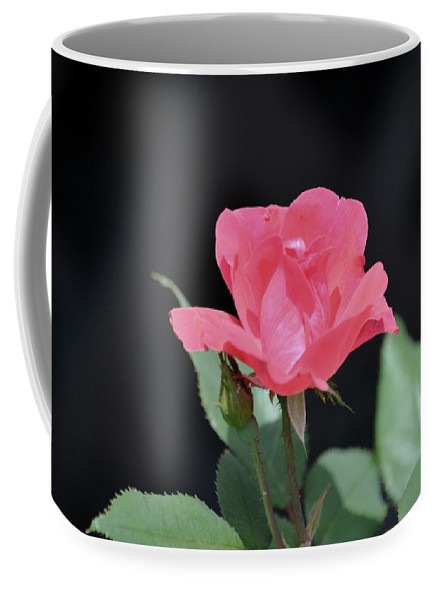 Rose Coffee Mug featuring the photograph Still Life Portrait Of A Rose by Karen Majkrzak