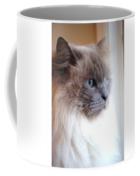 Cat Coffee Mug featuring the photograph Still Waiting by Cindy Johnston