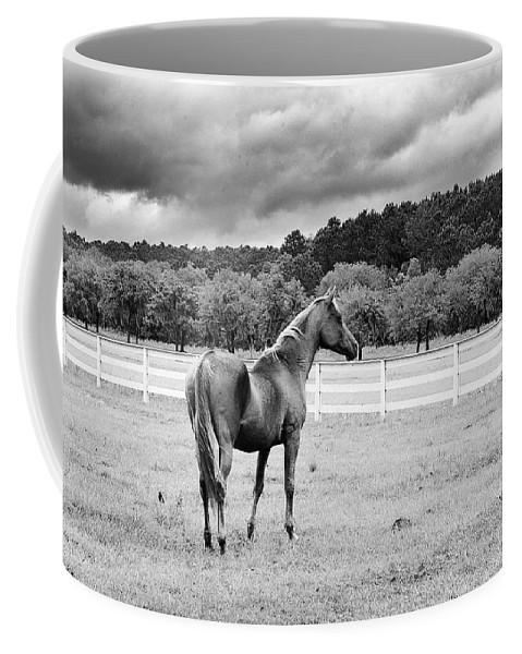 Hansen Coffee Mug featuring the photograph Stormy Pasture by Scott Hansen