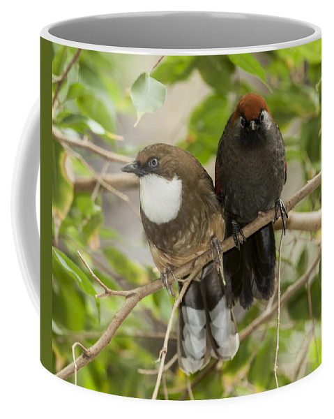 Birds Coffee Mug featuring the photograph Strange Couple by Richard Kitchen