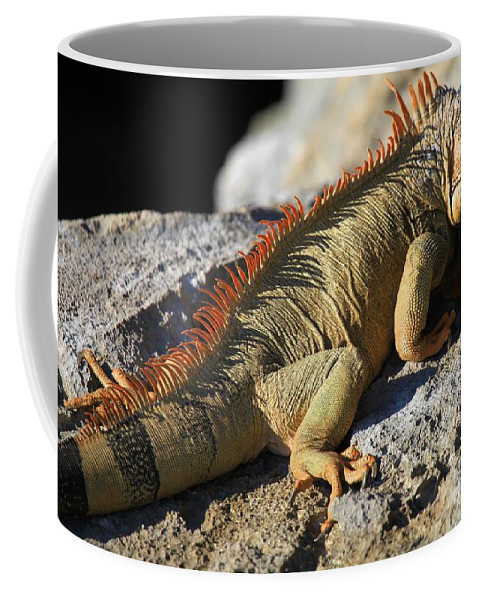 Iguana Coffee Mug featuring the photograph Stretched Out by Adam Jewell