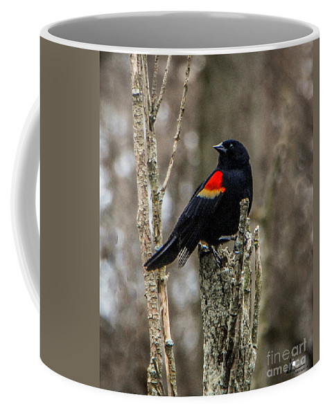 Stump Coffee Mug featuring the photograph Stump Sitter by Grace Grogan