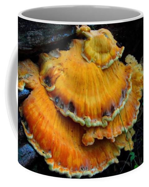 Polypore Images Bracket Mushroom Images Sulphur Shelf Prints Chicken Of The Woods Prints Edible Mushroom Pics Survival Skills Biodiversity Orange Shelf Fungi Images Nature Oldgrowth Forest Conservation Forest Ecology Coffee Mug featuring the photograph Sulphur Shelf by Joshua Bales