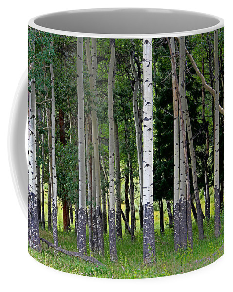 Aspen Coffee Mug featuring the photograph Summer Aspen by Lynn Sprowl