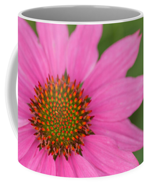 Summer Coffee Mug featuring the photograph Summer Coneflower by Lindley Johnson