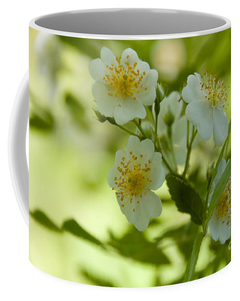 White Coffee Mug featuring the photograph Summer Flower by William Norton