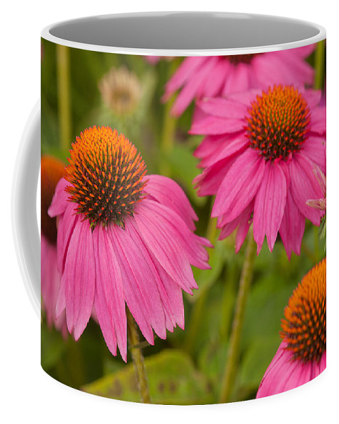 Coneflowers Coffee Mug featuring the photograph Summer Garden by Lindley Johnson