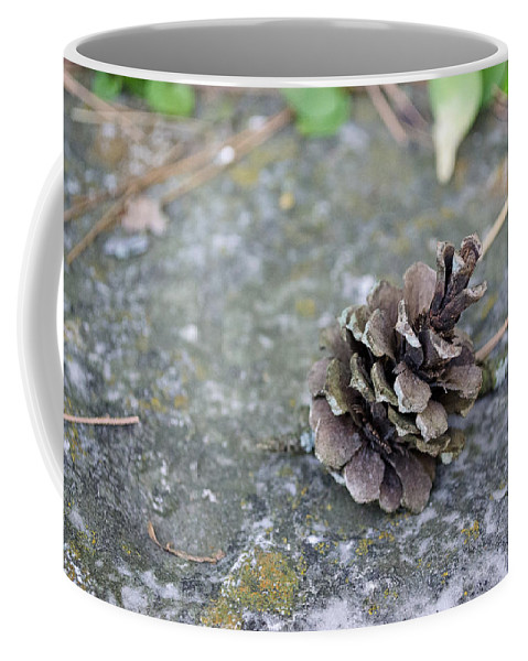Pinecone Coffee Mug featuring the photograph Summer Pinecone by Jim Shackett