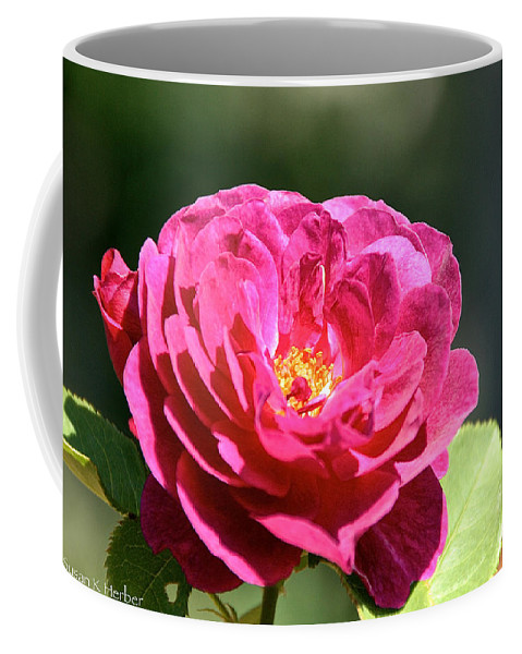 Flower Coffee Mug featuring the photograph Summer Rose by Susan Herber