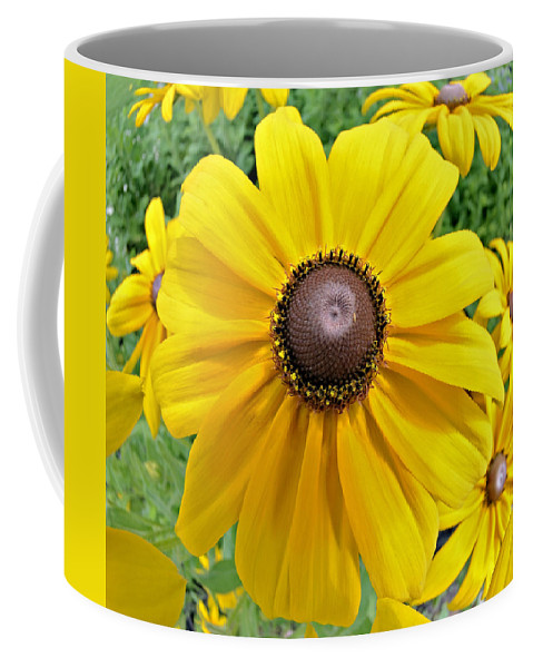 Daisy Coffee Mug featuring the photograph Summers Bloom by Susan Leggett