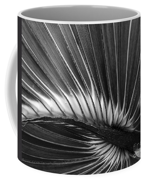 Plant Coffee Mug featuring the photograph Summers Fan by Amanda Sinco