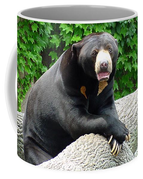 Sun Bear Coffee Mug featuring the photograph Sun Bear - 09515-1 by Gary Gingrich Galleries