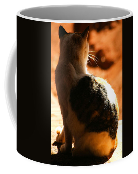 Cat Coffee Mug featuring the photograph Sun Cat by Tracey Beer