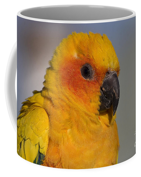 Parrot Coffee Mug featuring the photograph Sun Conure by Steven Ralser