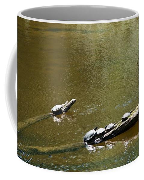 Turtles Coffee Mug featuring the photograph Sunbathing Turtles by Linda Kerkau