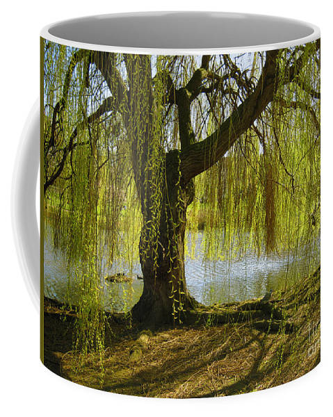 Tree Coffee Mug featuring the photograph Sunday In The Park by Madeline Ellis