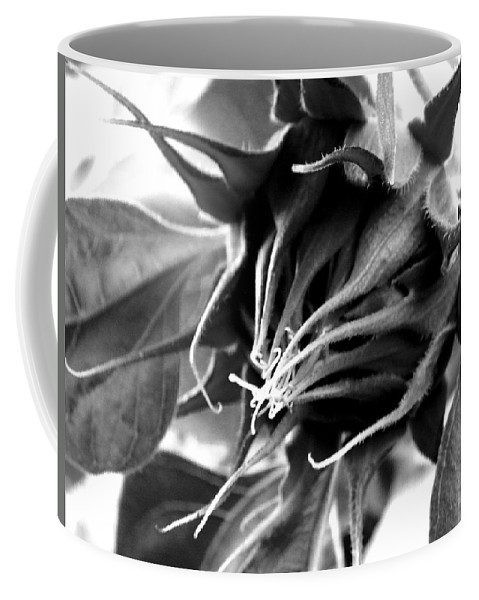 Sunflower Coffee Mug featuring the photograph Sunflower Beginning by Sandi OReilly