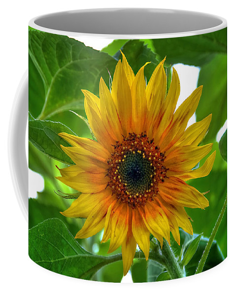 Sommer Coffee Mug featuring the pyrography Sunflower by Steffen Gierok