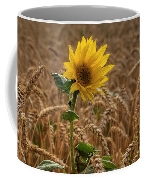 Summer Coffee Mug featuring the pyrography Sunflowers At Corny by Steffen Gierok