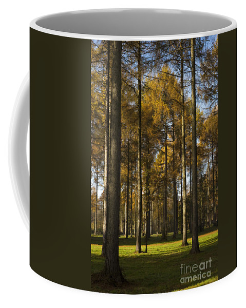 Arboreta Coffee Mug featuring the photograph Sunny Larch Grove by Anne Gilbert