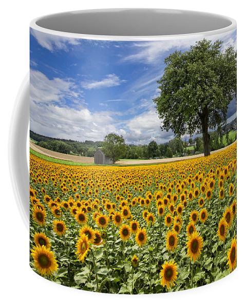 Appalachia Coffee Mug featuring the photograph Sunny Sunflowers by Debra and Dave Vanderlaan