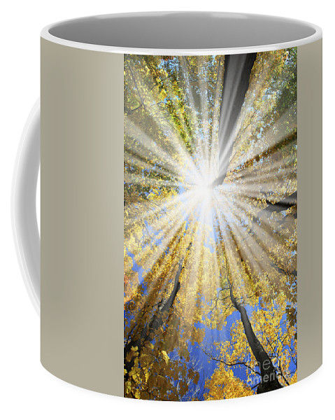 Autumn Coffee Mug featuring the photograph Sunrays In The Forest by Elena Elisseeva