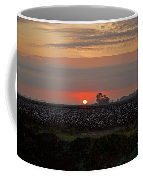 Landscape Coffee Mug featuring the photograph Sunrise On The Cotton Field by Debbie Portwood