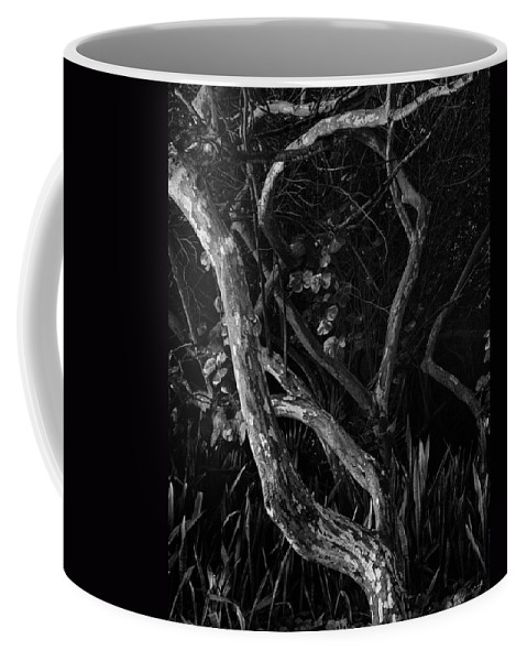 Sea Grape Tree Coffee Mug featuring the photograph Sunrise by Robert Swinson