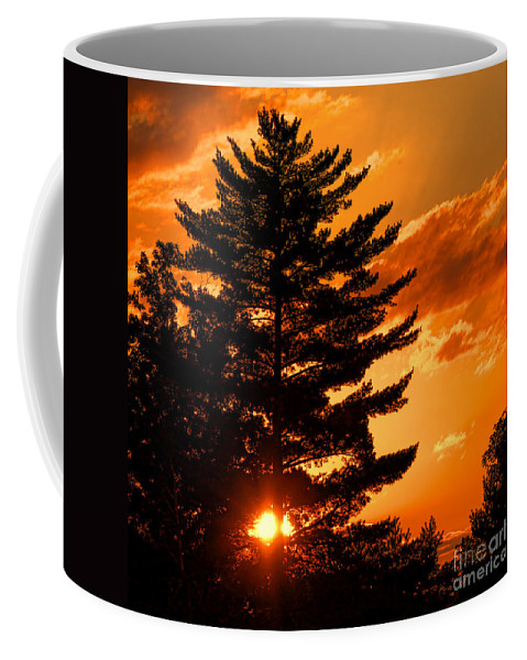 Sun Coffee Mug featuring the photograph Sunset And Pine Tree by Olivier Le Queinec