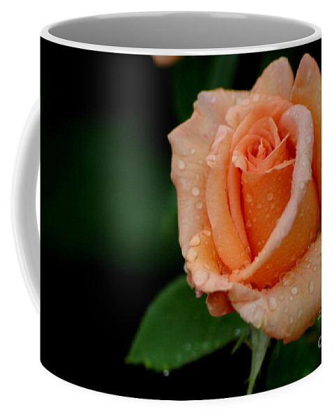 Roses Coffee Mug featuring the photograph Sunset Celebration by Living Color Photography Lorraine Lynch