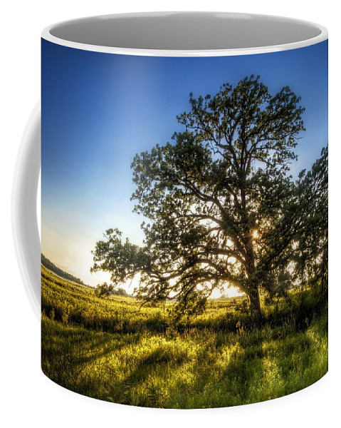 Sunset Coffee Mug featuring the photograph Sunset Oak by Scott Norris
