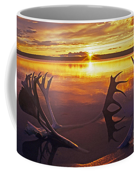 Whitefish Lake Coffee Mug featuring the photograph Sunset On Caribou Antlers In Whitefish Lake by Dave Welling