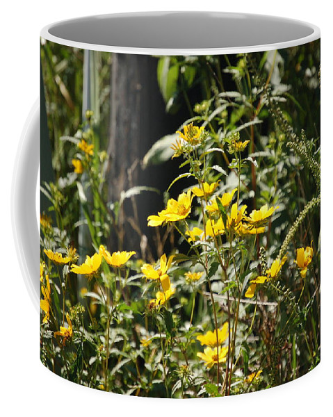 Wildflowers Coffee Mug featuring the photograph Sunshine Flower 3 by Lucy Bounds