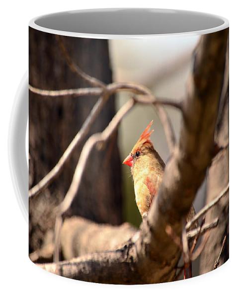 Bird Coffee Mug featuring the photograph Sunshine Makes Me Happy by Lori Tambakis