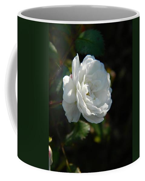 Sun Coffee Mug featuring the photograph Sunshine White Rose by Nicki Bennett