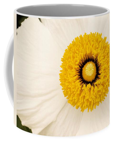 Flowers Coffee Mug featuring the photograph Sunshine by Windy Osborn