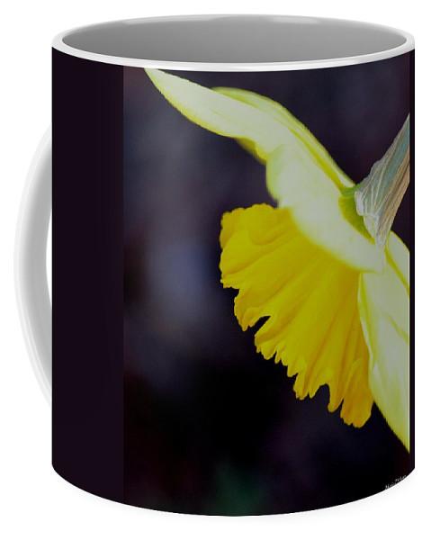 Sunshine Yellow Daffodil Coffee Mug featuring the photograph Sunshine Yellow Daffodil by Maria Urso
