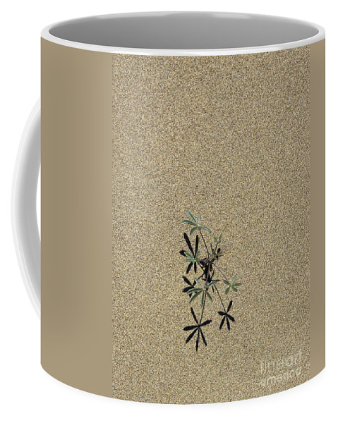 Sand Coffee Mug featuring the photograph Survival Of The Fittest by Sharon Elliott