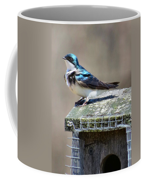 Tree Coffee Mug featuring the photograph Swallow In The Wind by Art Dingo