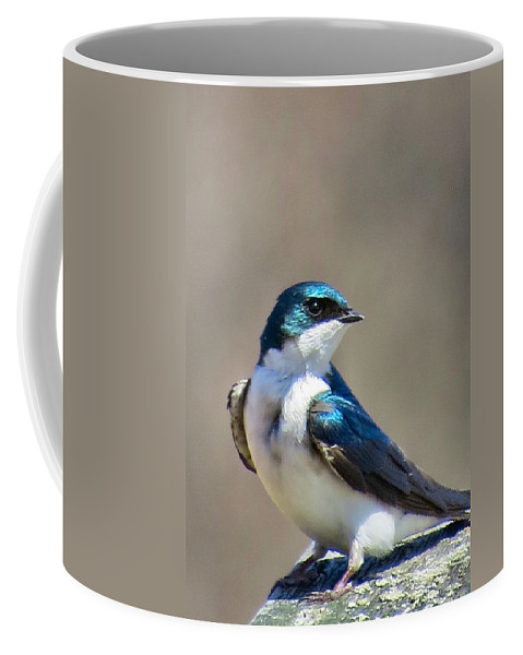 Tree Coffee Mug featuring the photograph Swallow Stud by Art Dingo